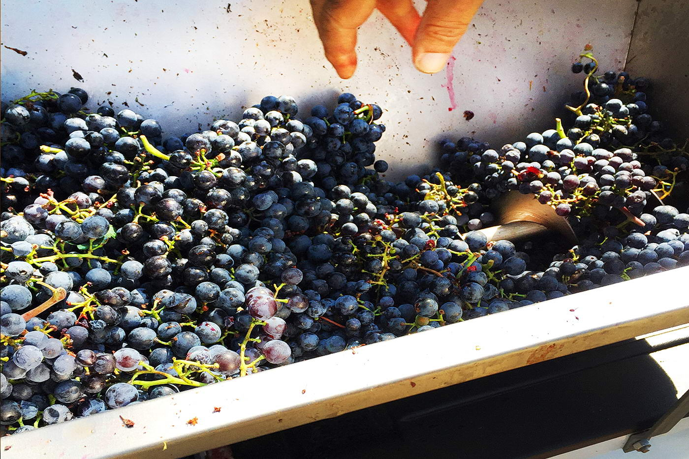 2Mario - Natural Wine by Skabe